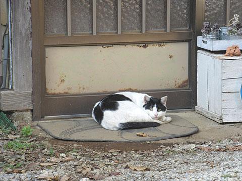 ネコ-生き物の気配