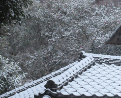 雪になりました