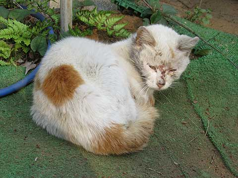 負傷ネコを保護