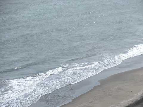 波打ち際での散骨