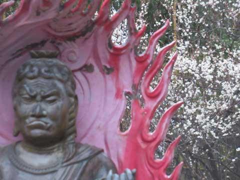 不動明王と梅の花