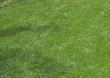 隣の芝生は青い