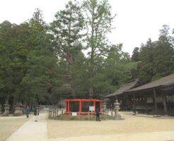 高野山、三鈷の松の写真